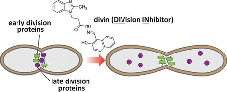 Divin: A Small Molecule Inhibitor of Bacterial Divisome Assembly   Flossing & Health   Scoop.it