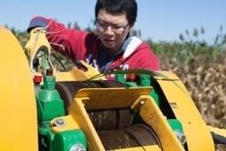 Dual-purpose biofuel crops could extend production, increase profits - U Illinois U-C (2017) | Ag Biotech News | Scoop.it