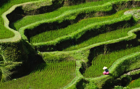 Bali Traditional Irrigation – Rice Terrace | The Blog's Revue by OlivierSC | Scoop.it