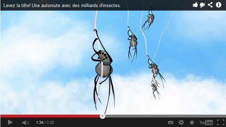 La loterie aérienne de l'araignée et de son parachute fait maison | EntomoNews | Scoop.it