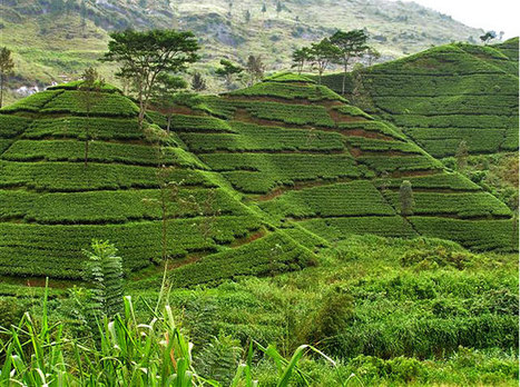 What is Sustainable Agriculture | Climate Smart Agriculture | Scoop.it