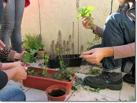 Urban Permaculture for the Balcony and Beyond (Argentina) | Healthy and Sustainable Living MOOC 2014 | Scoop.it