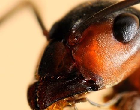 Fotos: Hormigas de cerca - Hormigas: De cerca | Ciencia y curiosidades:Muy interesante | Scoop.it