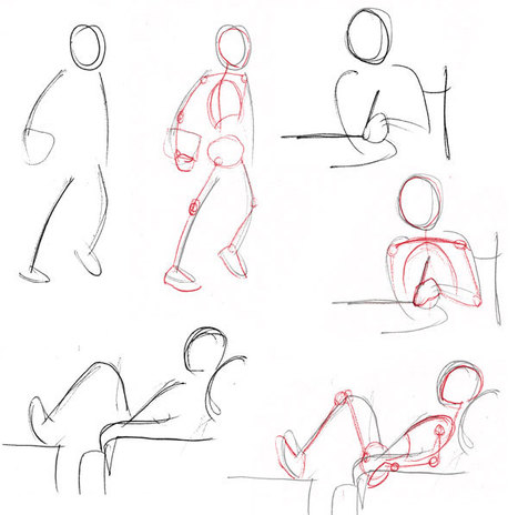 Human Anatomy Fundamentals: Basic Body Proporti...