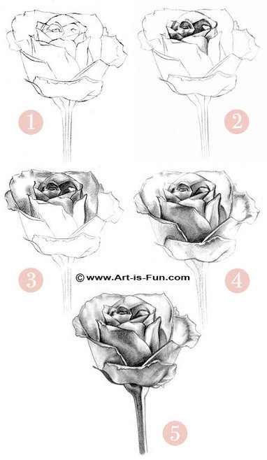 How to draw a rose learn to draw rose pencil drawings