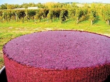L'équilibre des nouveaux bordeaux   Le Devoir   Vin passion   Scoop.it