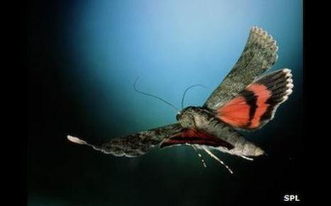 ¿Cuál es el secreto del vuelo de los insectos? - El Comercio | Bichos en Clase | Scoop.it