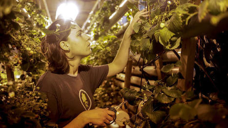 Urban Till Registers with Restaurants Who Want Local, Fresh Produce   Sustainability: Permaculture, Organic Gardening & Farming, Homesteading, Tools & Implements   Scoop.it