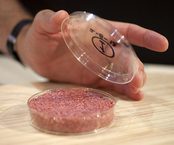 Test tube burger unveiled at public tasting | Contemporary Art, Design and Technology | Scoop.it