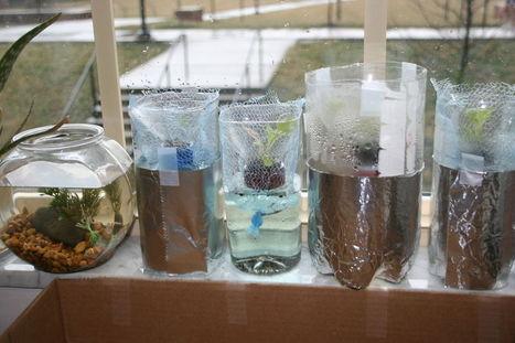 hydroponic lettuce garden from plastic bottles (Grow bottles) | Vertical Farm - Food Factory | Scoop.it