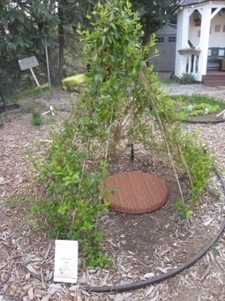 HoneysuckleTeepee | School Gardening Resources | Scoop.it