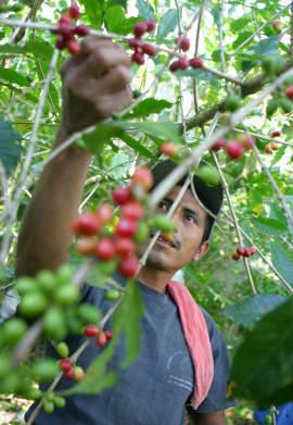 Tatawelo, il caffè dei GAS | Equo solidale e sociale | Scoop.it