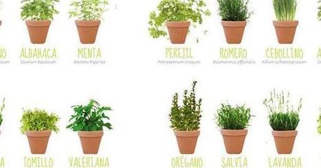 Propiedades de las plantas aromáticas más famosas | Agroindustria Sostenible | Scoop.it