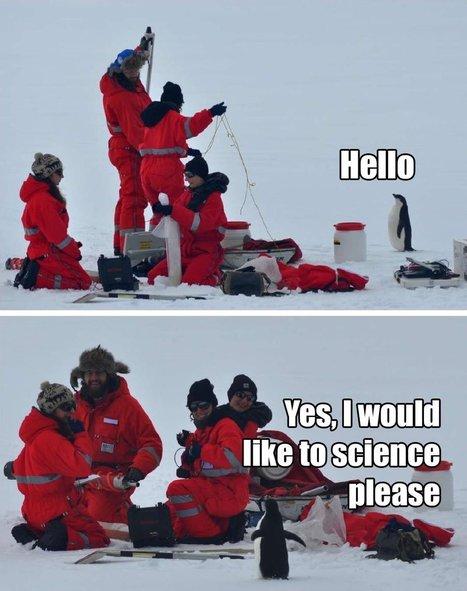 Watch rotund penguins waddling on treadmills, because science | Antarctica | Scoop.it