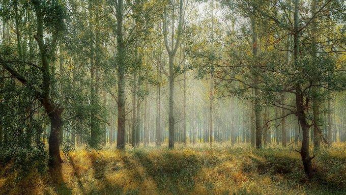 FORÊTS : Sans intervention humaine, les forêts dépérissent