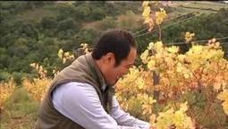 Hirotake Ooka, la difficile quête de goût d'un japonais dans les vignes - 06/10 | Vins nature, Vin de plaisir | Scoop.it