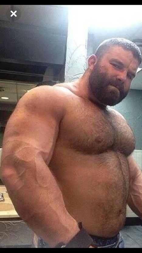 Free pictures bears gay bodybuilders