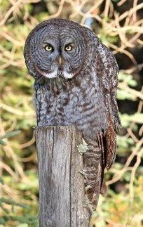 Countdown: Our 10 most popular blog posts in 2011 - BirdWatching ... | Birds and Birding | Scoop.it