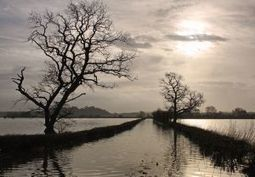 Reduce flood-risk through rewilding, says new report from Rewilding Britain | ecology and economic | Scoop.it