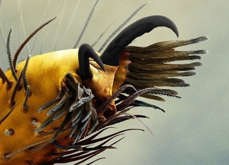 L'araignée s'arrêtera-t-elle de construire des toiles ? | EntomoNews | Scoop.it