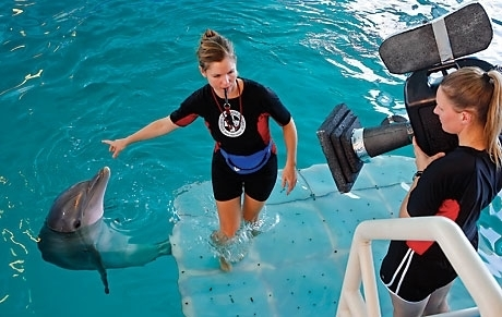 Tail of Survival at Clearwater Marine Aquarium | clearwater | Scoop.it