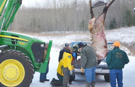 Atlanta: Poachers sought in killing of bull elk | Wildlife Trafficking: Who Does it? Allows it? | Scoop.it