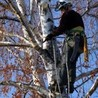 Sky High Tree Removal