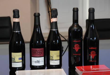 Le Marche e i vini d'eccellenza: il Serrapetrona e la Vernaccia | Le Marche un'altra Italia | Scoop.it