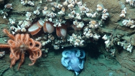 What Underwater Canyons Can Teach Us About the Future of Urbanism   Sustainable Futures   Scoop.it
