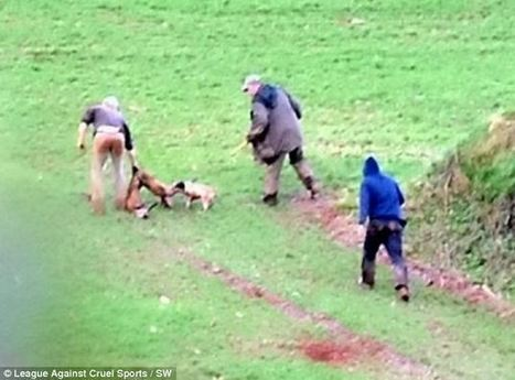 Shocking photos show the moment a fox is dragged out of its hole by hunters and shot in front of children as young as FIVE | Nature Animals humankind | Scoop.it