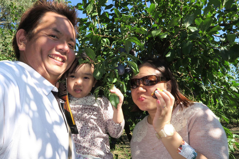 Pick Your Own Fruit All-Year Long At Rayner's Orchard   Victor   Scoop.it