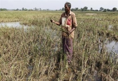 Weather extremes push Sri Lanka to adopt crop insurance - AlertNet | Green Deal | Scoop.it