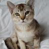Cat Breeds Information