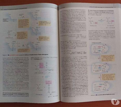 Ldnm cutting guide v3 pdf download phocomdasa i principi di biochimica lehninger 5 ed pdf fandeluxe Images