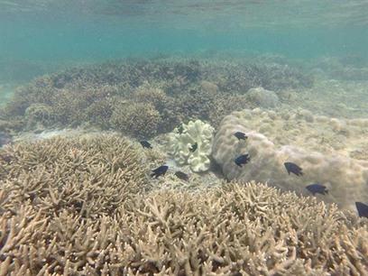 Vietnam - Écosystèmes marins en péril | Zones humides - Ramsar - Océans | Scoop.it