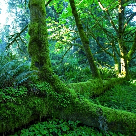 Increasing Loss of Biodiversity Comparable to Global Warming in Ecosystem Damage It Will Cause   EARTH MATTERS   Scoop.it