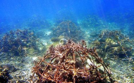 Save the reef | Scuba Diving Adventures | Scoop.it
