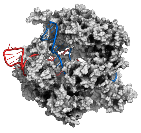 WTF is CRISPR? | Things to come | Scoop.it