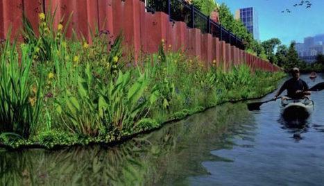 Des jardins flottants pour libérer la rivière de Chicago de la pollution ?   Veille en Environnement - Energie   Scoop.it