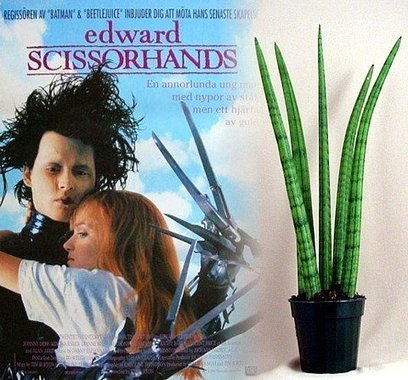 edward scissorhands connected with to kill Does edward scissorhands actually kill anyone edward scissorhands jim he does not kill anyone apart from his soul poor edward.