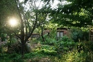 Plant Profiles - Balkan Ecology Project | Think Like a Permaculturist | Scoop.it