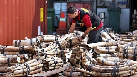 War against cruel trade in animals | Wildlife Trafficking: Who Does it? Allows it? | Scoop.it