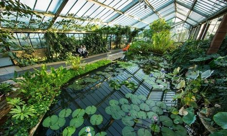 Kew Gardens funding is 'recipe for failure', warn MPs   Leading for Nature   Scoop.it