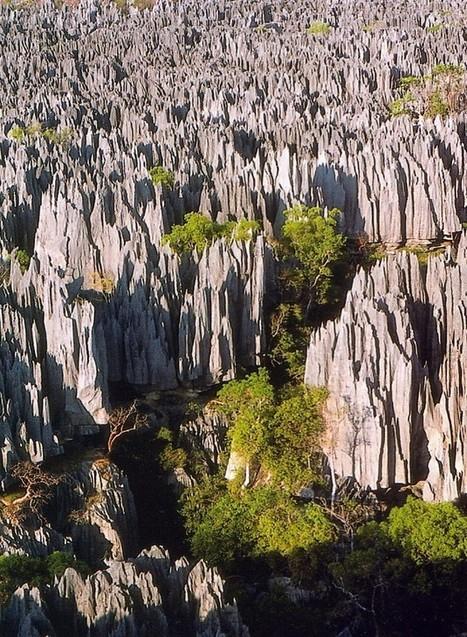 Appel aux dons pour un trek scientifique à Madagascar | EntomoScience | Scoop.it
