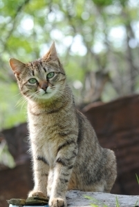 Care For Cats   Guide for wild, feral, stray, and domesticated cat care.   Cats Rule the World   Scoop.it