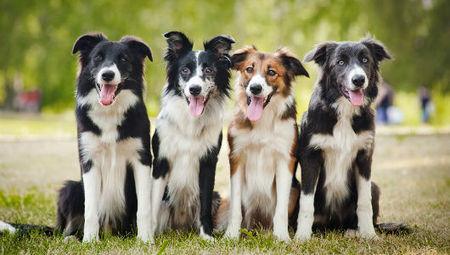 38 benefits of owning a dog | Edu's stuff | Scoop.it