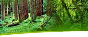 Save the Amazon Rainforest | Amazon River - Rainforest Animals | Deforestation In The Amazon Rainforest | Scoop.it