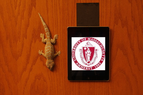 Gecko-like Adhesives Now Useful for Real World Surfaces | :: Science Innovation :: Research News :: | Scoop.it