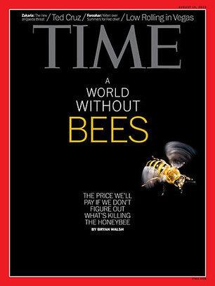 The Plight of the Honeybee | Gardening Life | Scoop.it