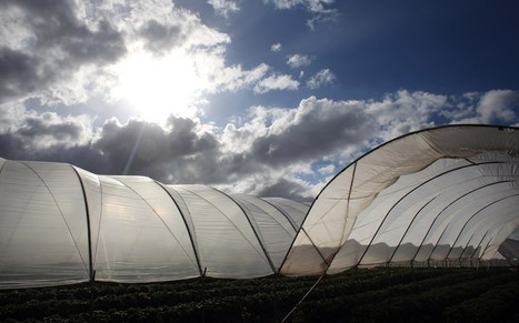 British-produced food would run out today, farmers warn | BIOSCIENCE NEWS | Scoop.it